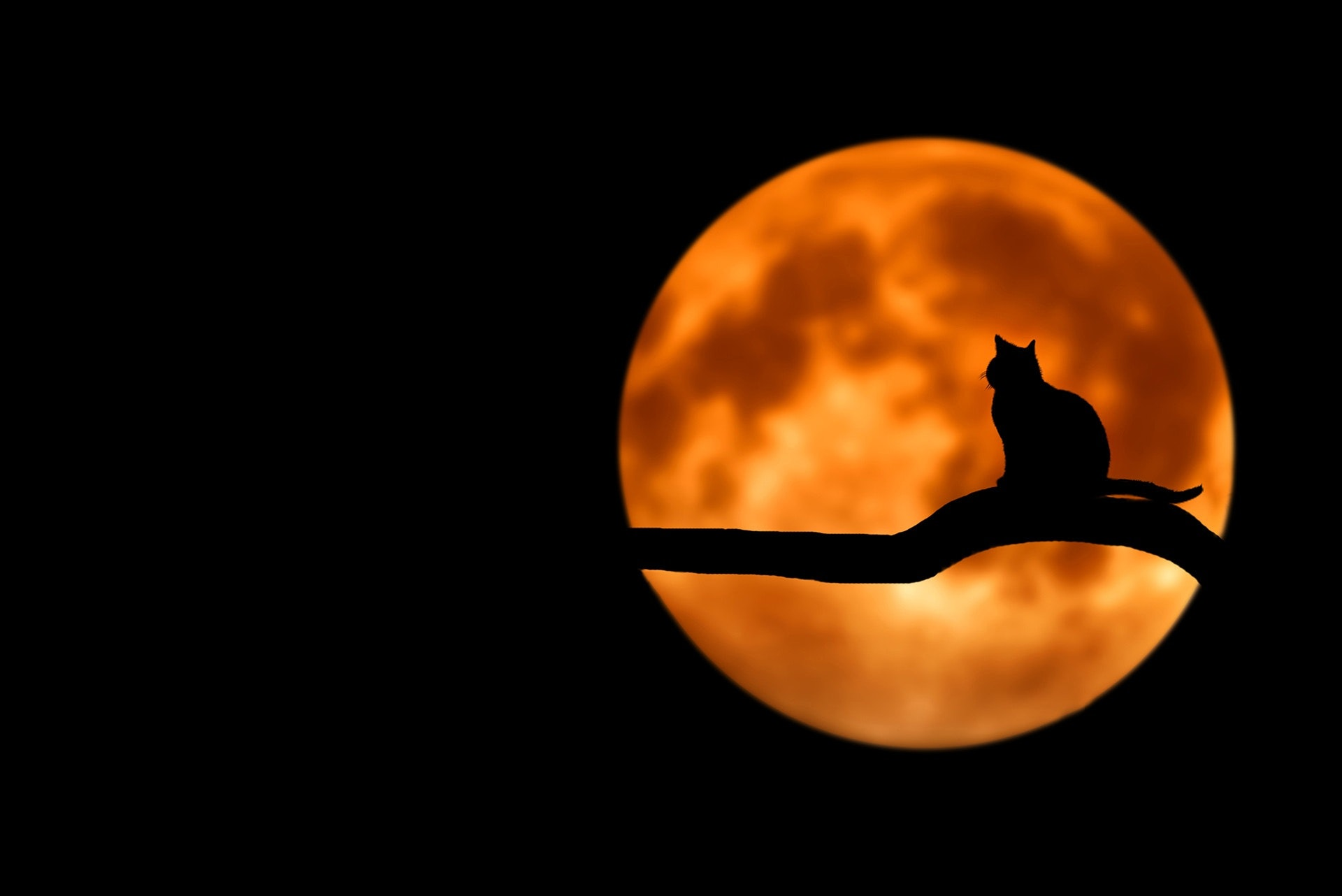 halloween gatti neri superstizione.jpg
