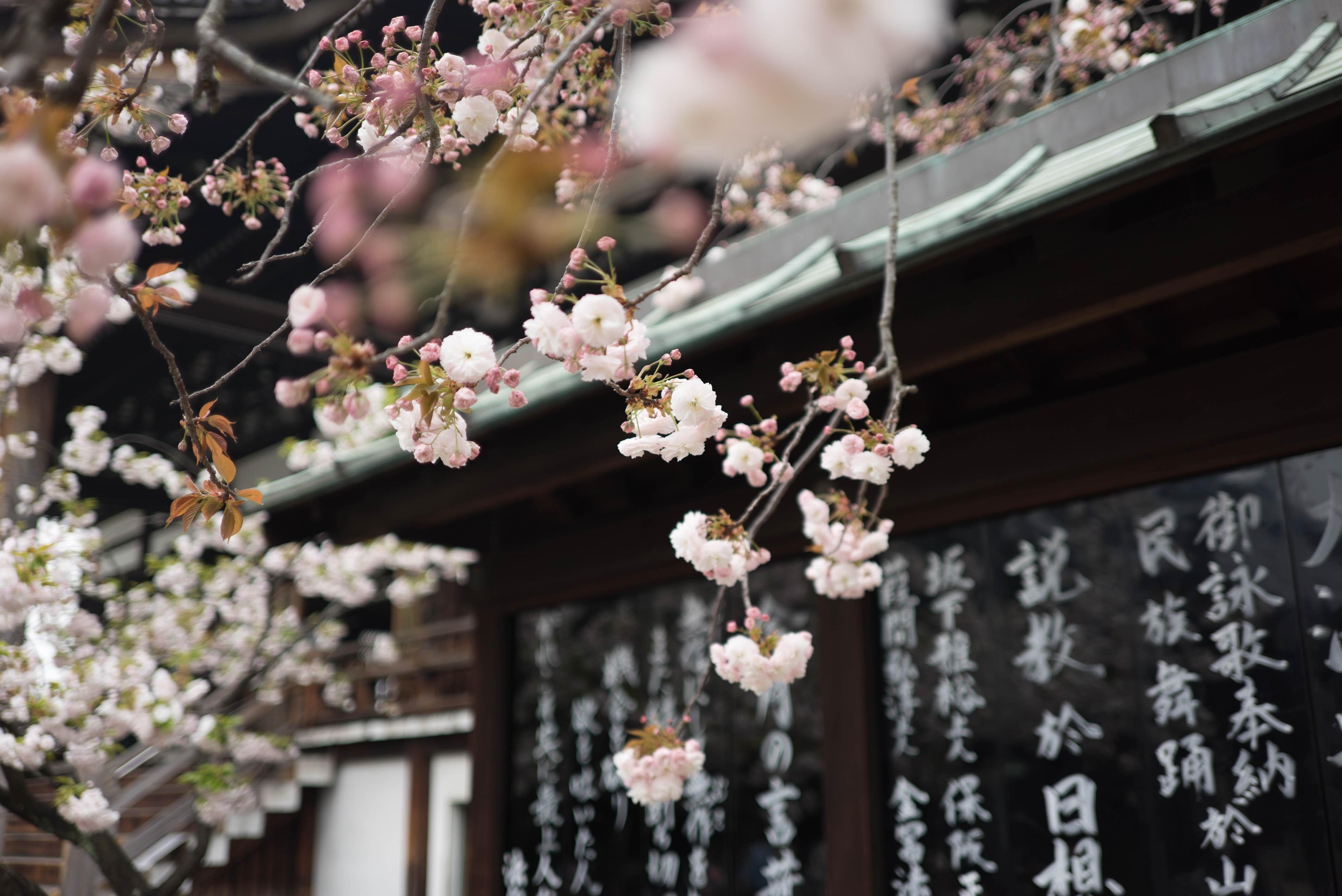 parole giapponesi felicità.jpg